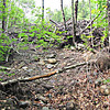 New north end of the Rocky Branch Trail (South), thanks to Hurricane Irene;  a wall of woods debris before a former RB crossing, .1 mile north of the Stairs Col Trailhead.