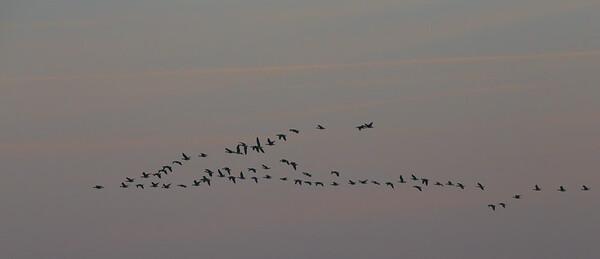 2014-10-04 Groote Peel