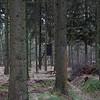 LeendeH-RWAS6835