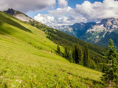High Alpine Parkland