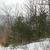 At the north end of the P.N. Trail, where it joins the Burrows Farm Trail. Looking NE towards Beauty Ledge.