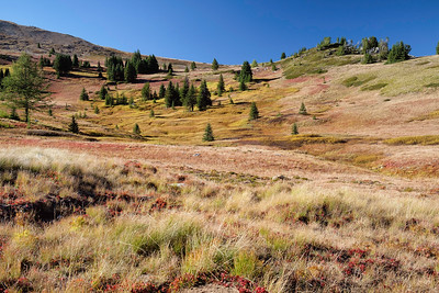 Meadows near the headwaters of Timber Wolf Creek