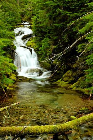 Rainier Eastside Trail & Silver Falls