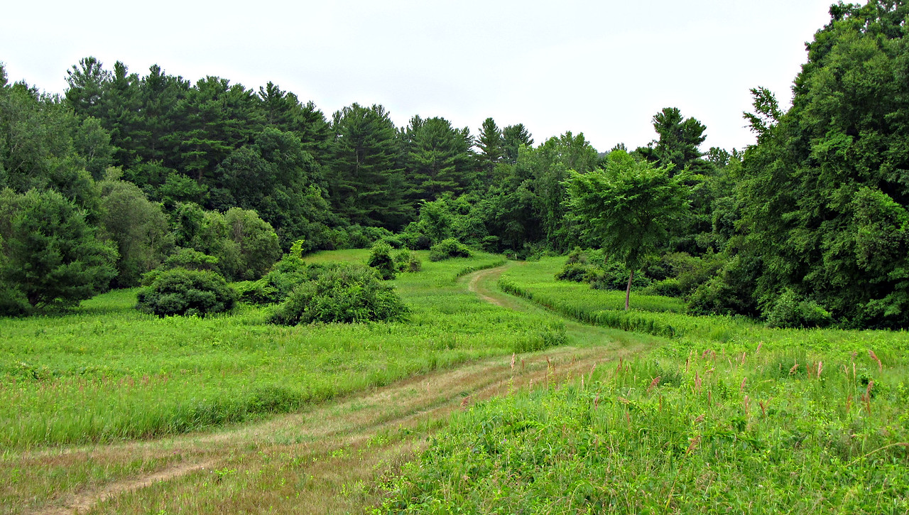 Stonymeade goes through an old farm field shortly before it ends at Concord's Annursnac Hill Conservation Area.