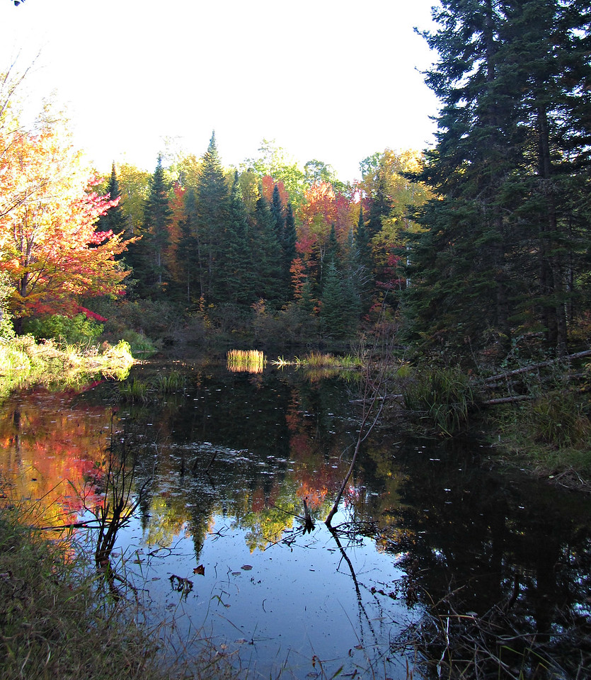 Beaver pond on Freezeout Trail.