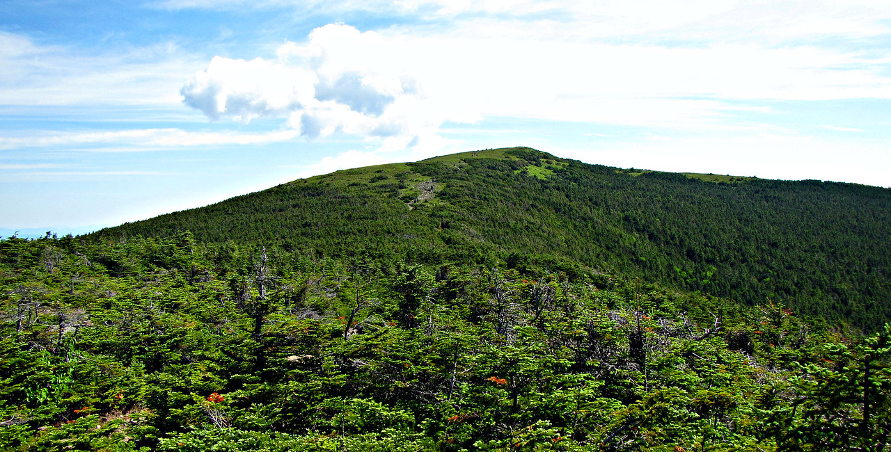 Moosilauke summit from Carriage Road.