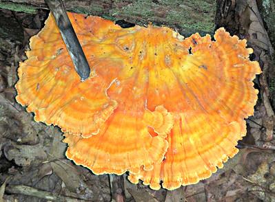 Strange Fungi - #1.