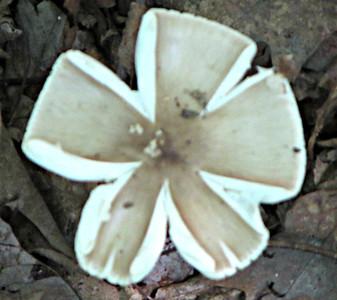 Strange Fungi -  #4.