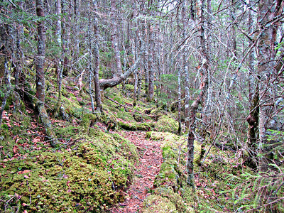 Moss covered much of these trails, including the So. Percy spur.