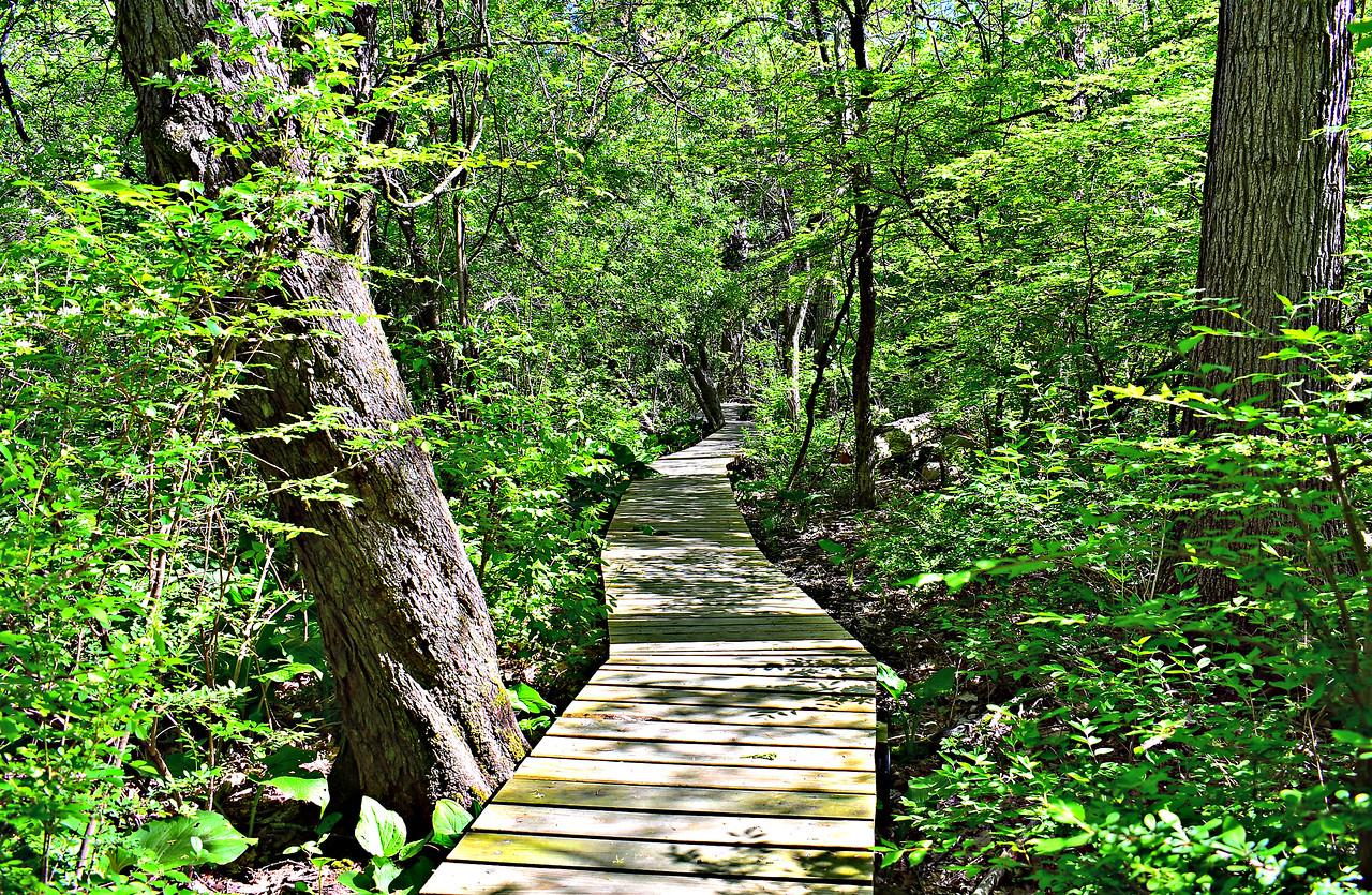 On a spur trail a little west of Plain Road - a 2015 Eagle Scout's project.