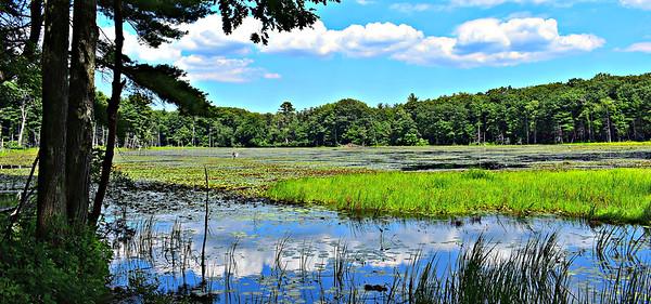 Mink Pond from SW corner.