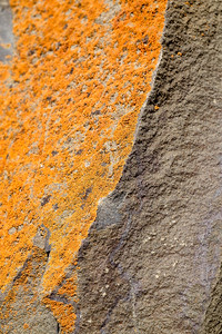 Lichen and rock