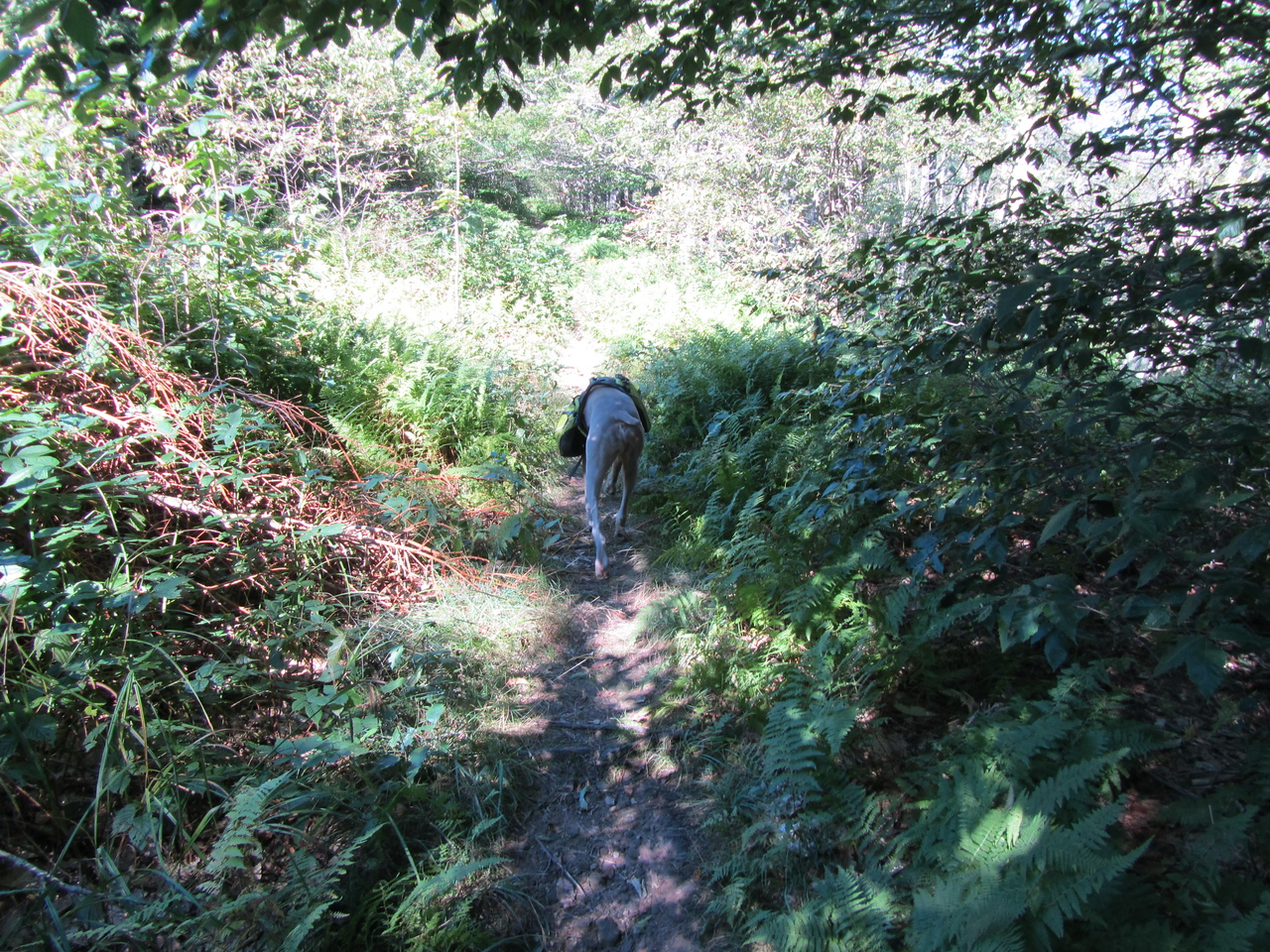 The trail started out flat and easy. This promised to be a nice stroll thought the woods.