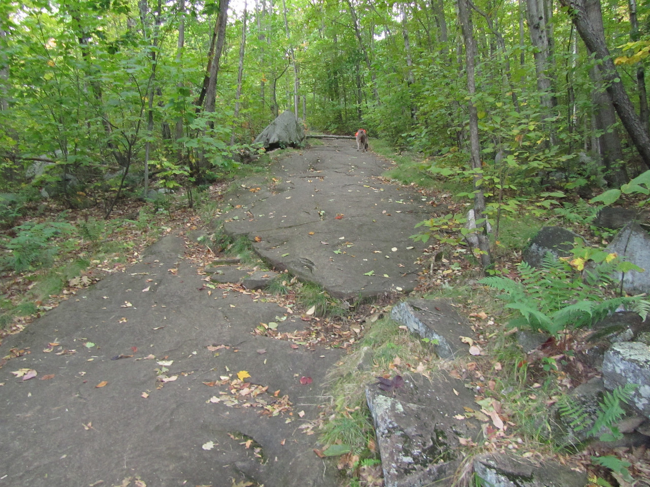 Again, the rock face trail. Only thing that would make this more difficult is some marbles.