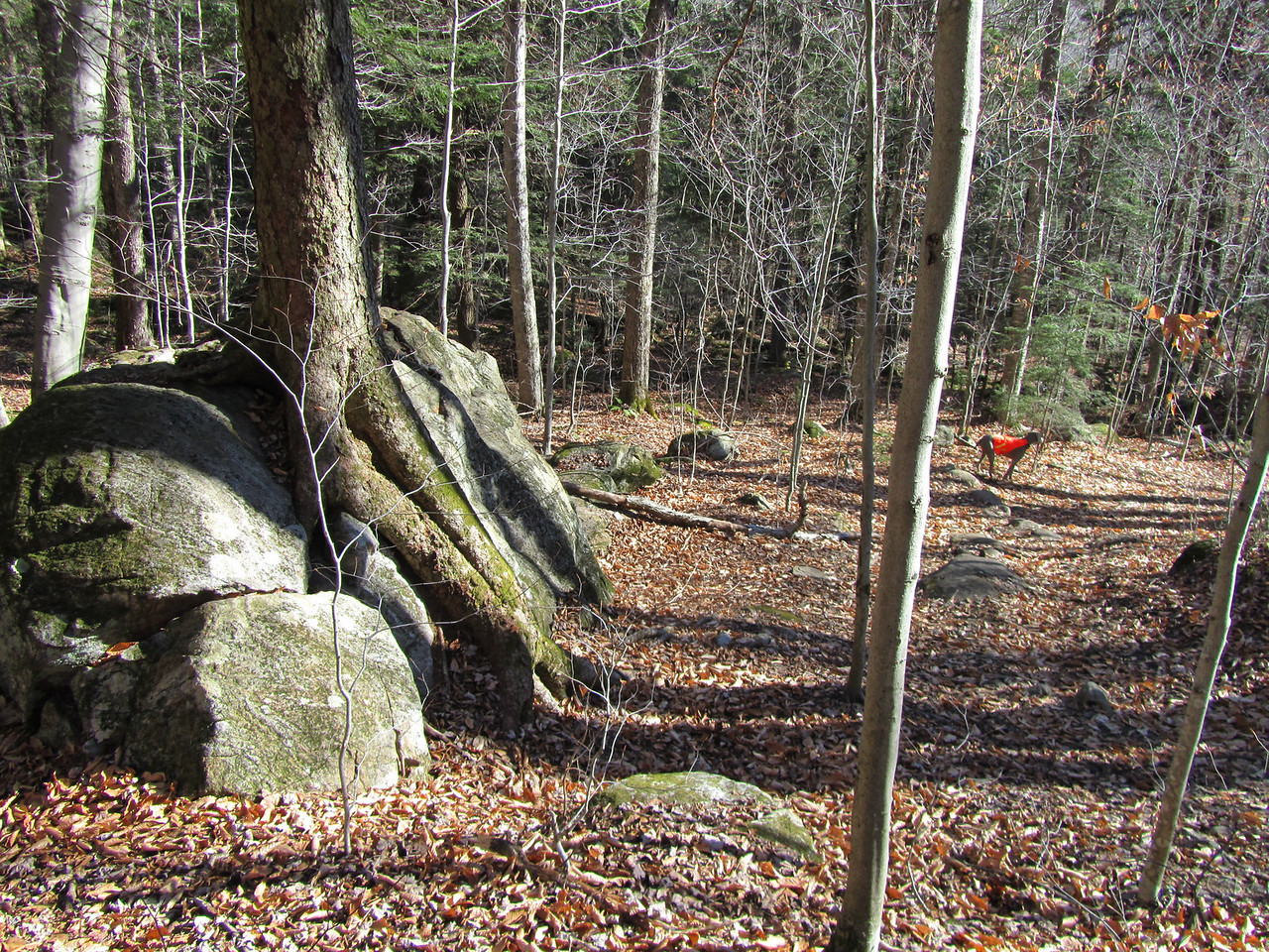 Tree on a rock. Seems to be a common site up north. Still amazing that they can handle high winds. That's it, back at the trail head. Highly recommended family hike with flat rock faces for picnics and great views.