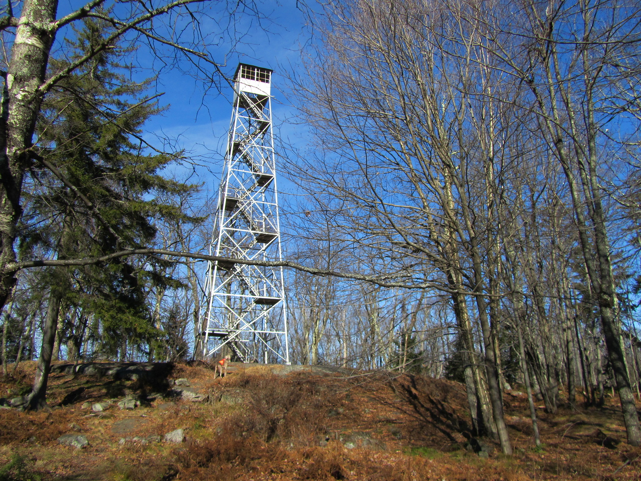 Kane Mountain fire tower. Gunter heading up to take a look. This tower was restored and open to the public but it is too steep for the dog and he gets nervous when I go up so we do not have pictures from the cab.