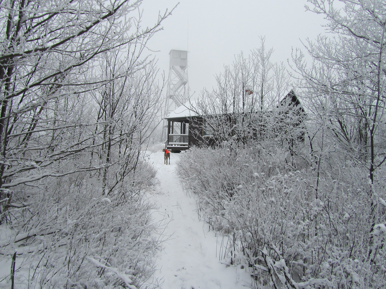 Another camo tower. Nice ranger cabin in great shape. I was tempted to move in and claim squatters rights.