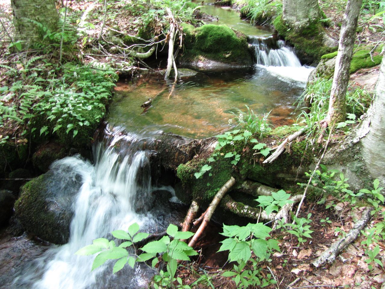 Nice waterfall. Gunter got a drink. Probably extended his beaver fever another week.