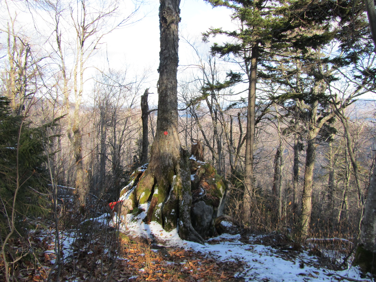 Heading back down and found this interesting tree completely eating a boulder.