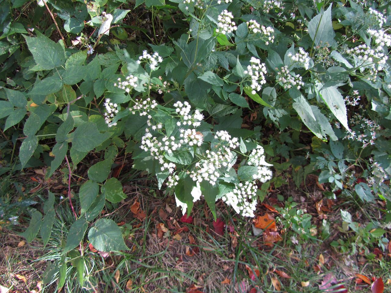 Pretty flowers. Rob pee'd on them.
