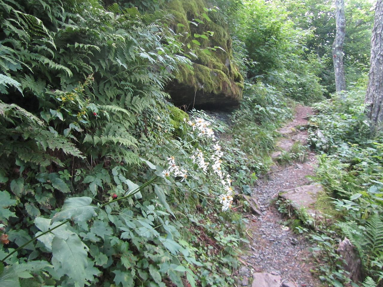 More Daisy Cliffardo, rasberries, and a nice bear den.