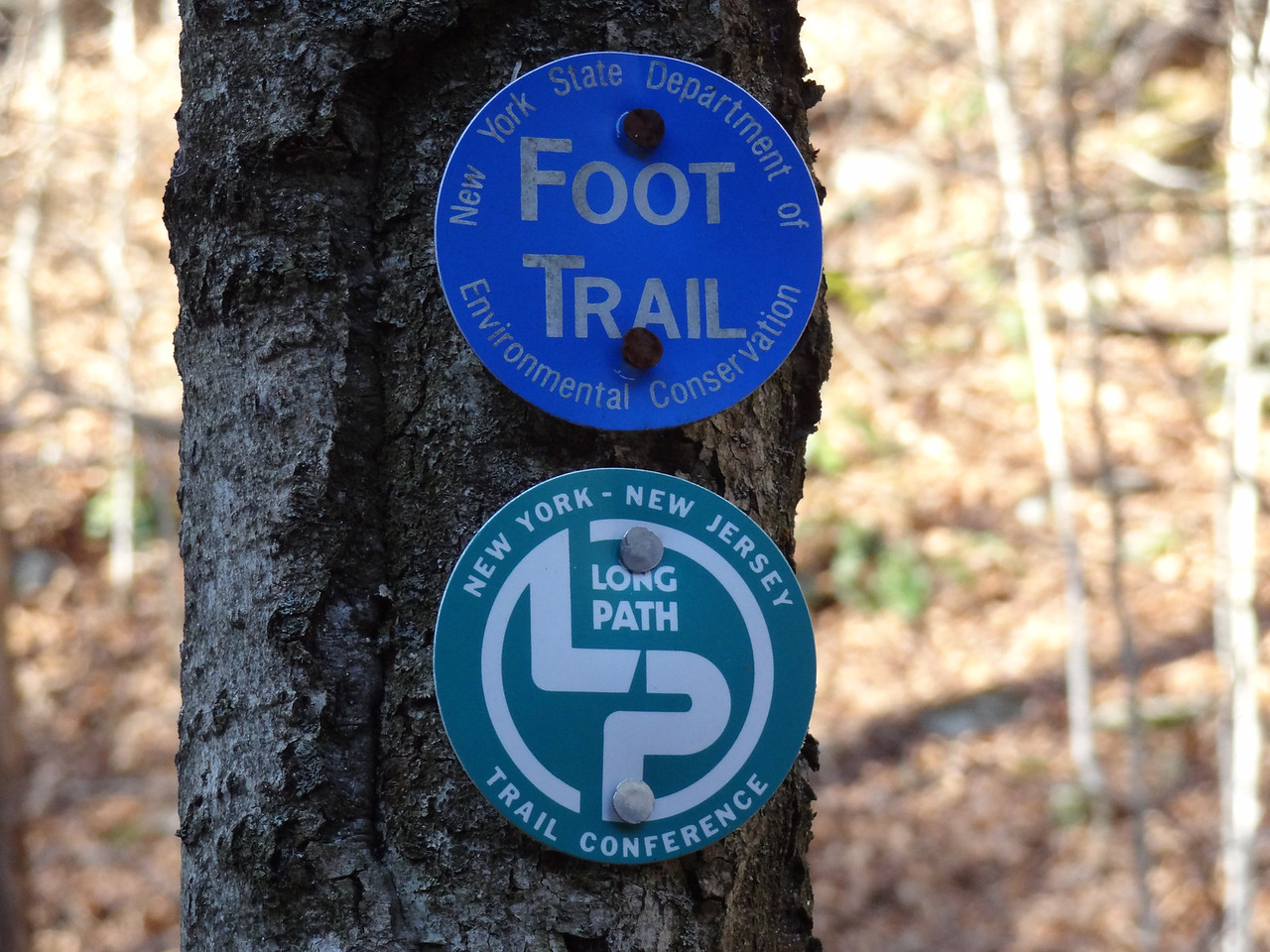 Another line item on my bucket list it to walk the entire Long Path 375 miles from Altamont, NY (SW of Albany) all the way to the George Washington Bridge.