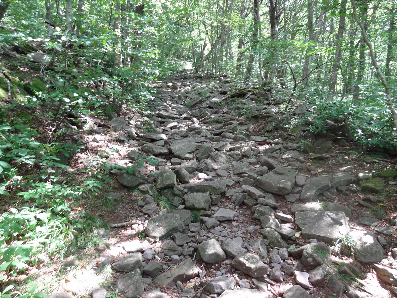 This was the middle section: a 1.3 mile section of rocky mess.