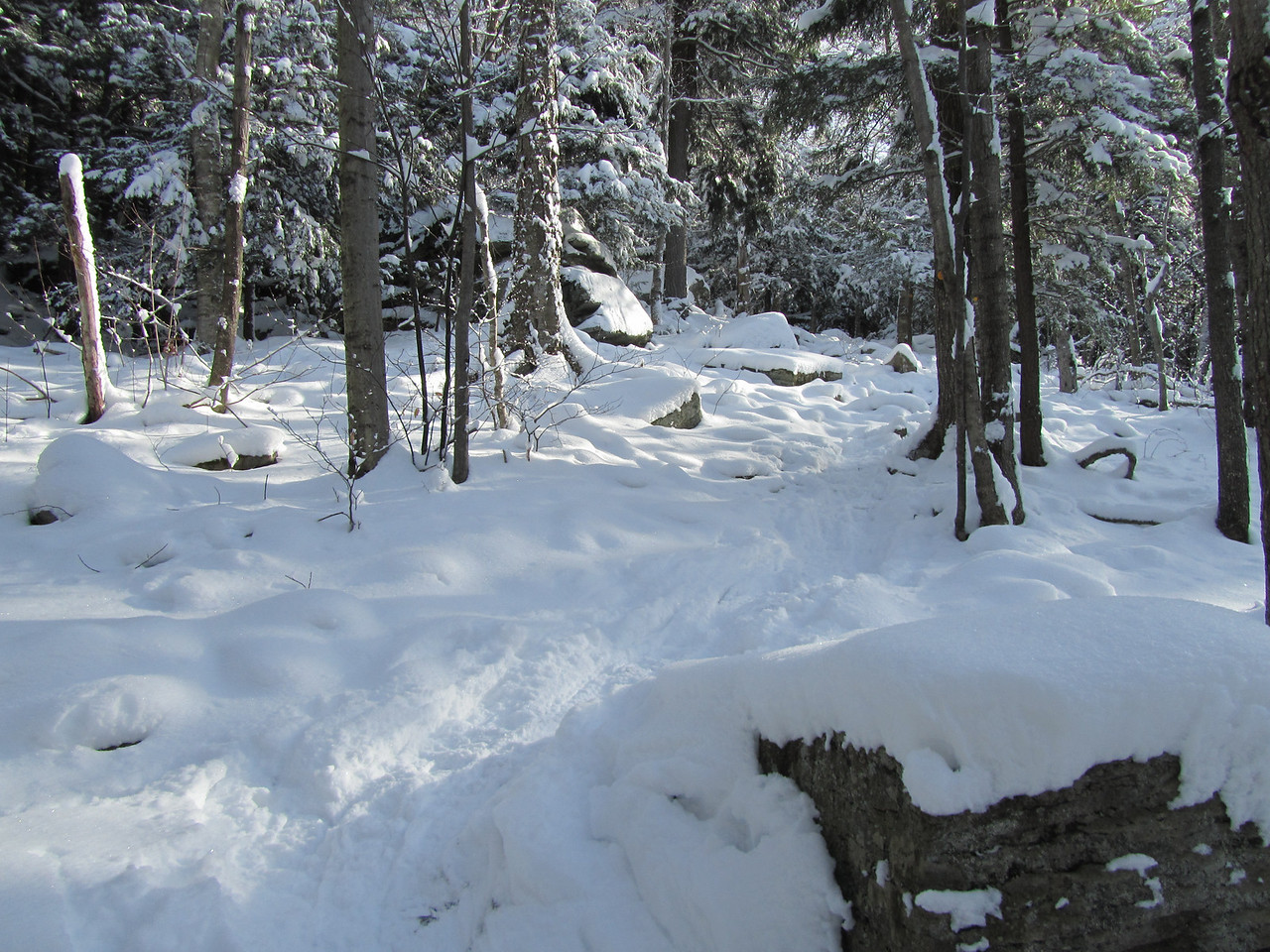 The trailhead was a little rocky but the snow and previous snowshoers packed it smooth.