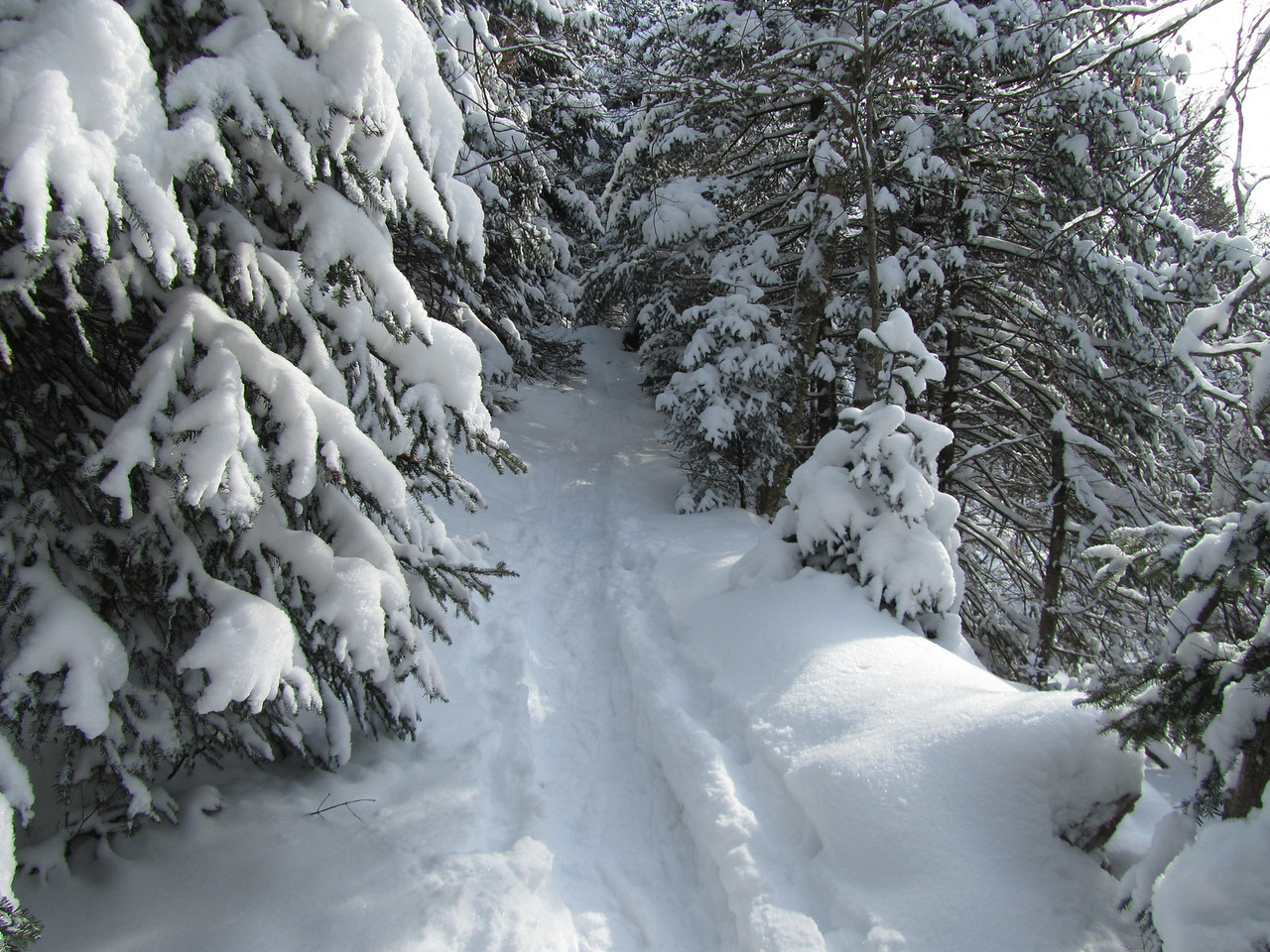 Nearing the top, the trail narrowed through pines and created a dramatic view, like we are entering the Yeti's lair.