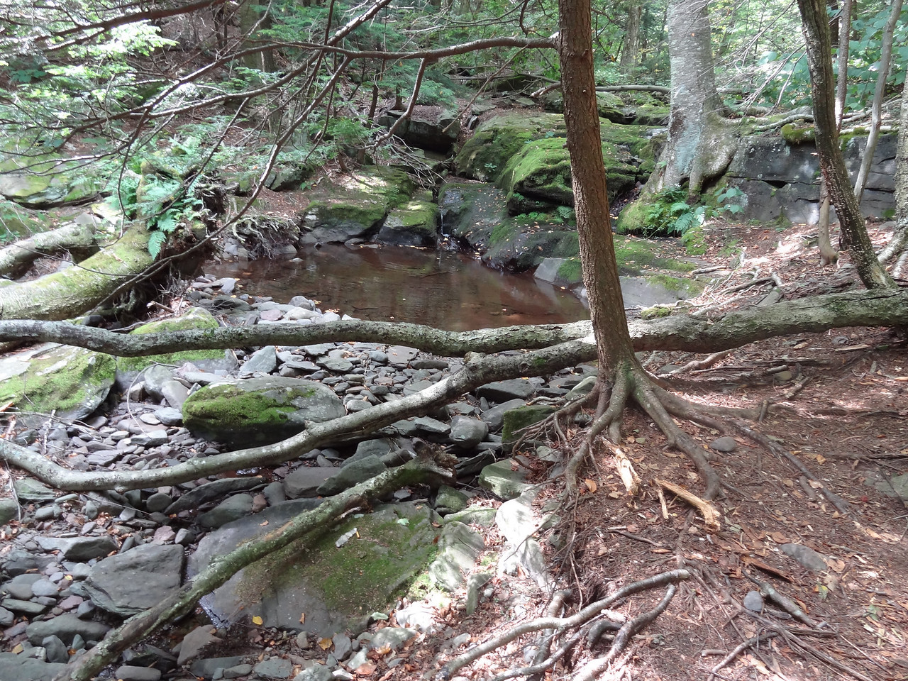 Small creek running low because of the beavers. Too small for trout now.