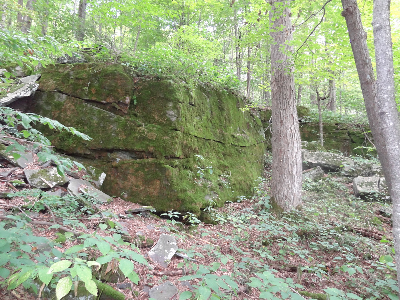 A mossy rock early into the hike.