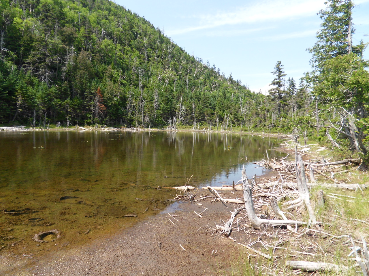 An old beaver pond neak Elk Pass. Notice the Moose footprints.
