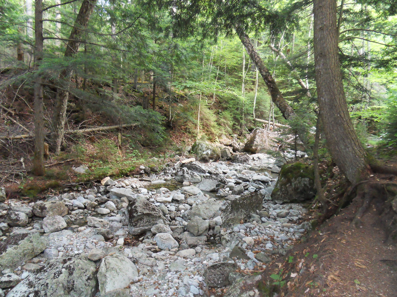 Luckily we did, this was the creekbed. Don't know where the trout went. Hopefully a martin or fisher will find them.