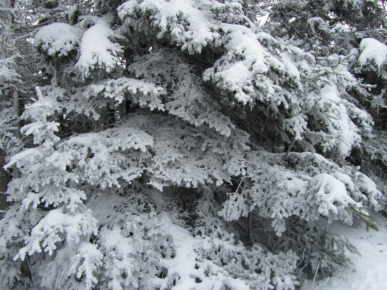 The snow and rain created these amazing crystals on the pines at the summit.
