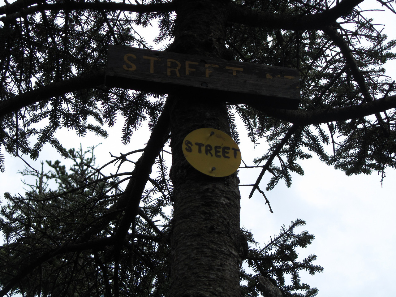 Summit of street. Signs are 10-12 feet up a tree so that winter snowshoers can see them with 8-10 feet of snow.