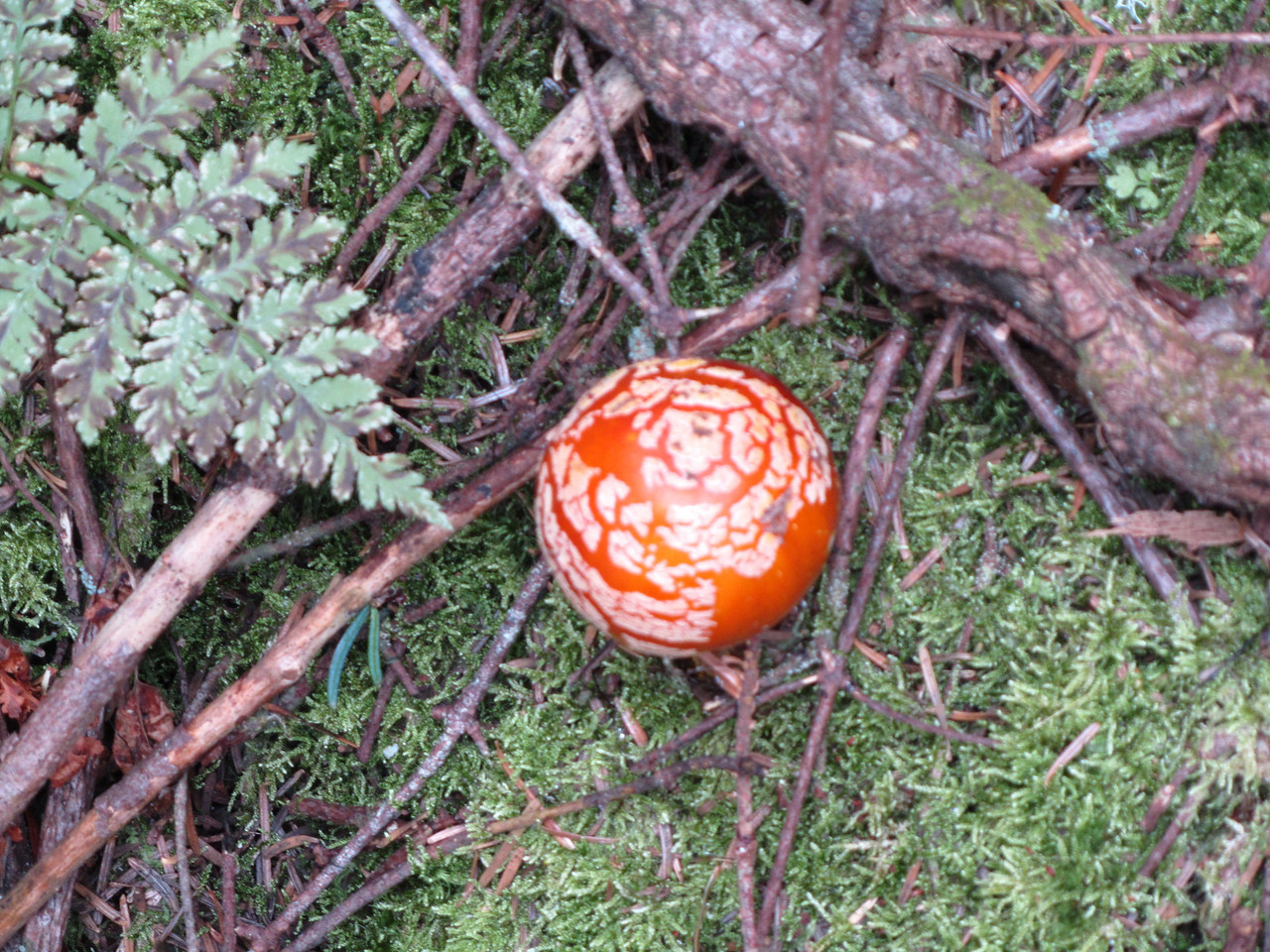There are always some interesting mushrooms on the hike. This one tasted delicious. I shared it with Bob Marley then we continued the hike together.