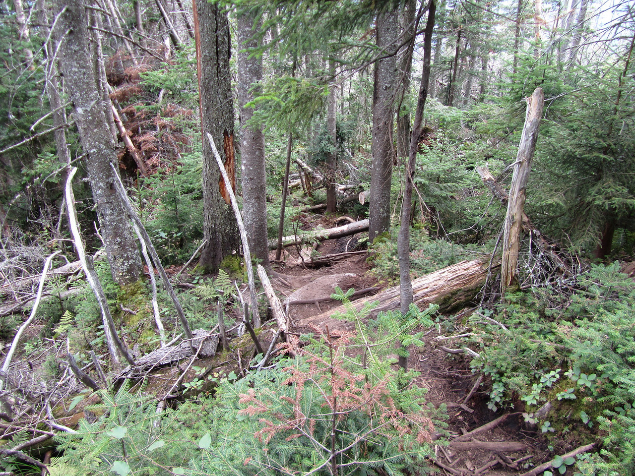 This is what they call an unmanned trail, so everything that blows over the trail stays there.