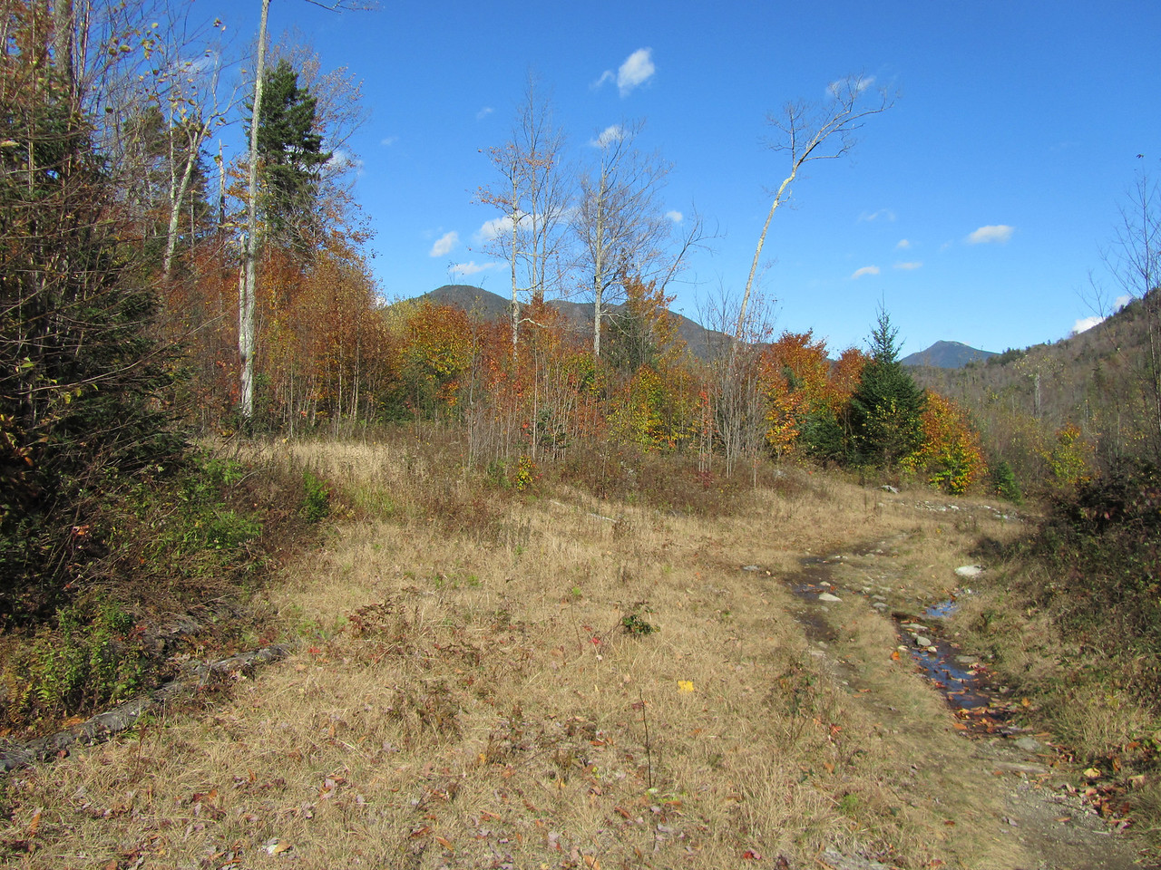 The trailhead from upper works. Apparently a microburst came through a few years ago and leveled the forest.