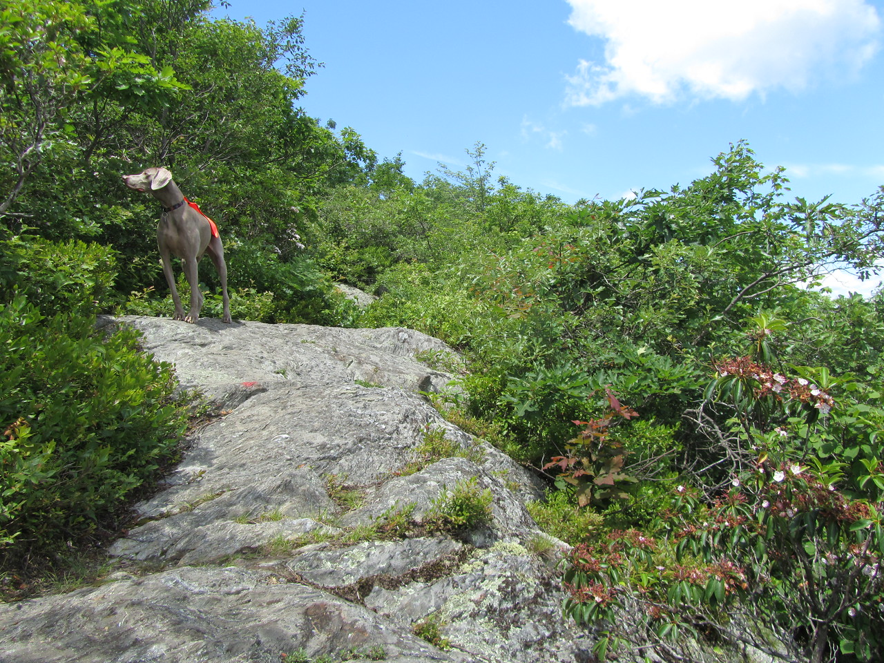 """The """"summit"""" of round mountain. The views were quite impressive after such a short hike. The ground cover: rocks and plants were unique reminding me of Cape Cod."""