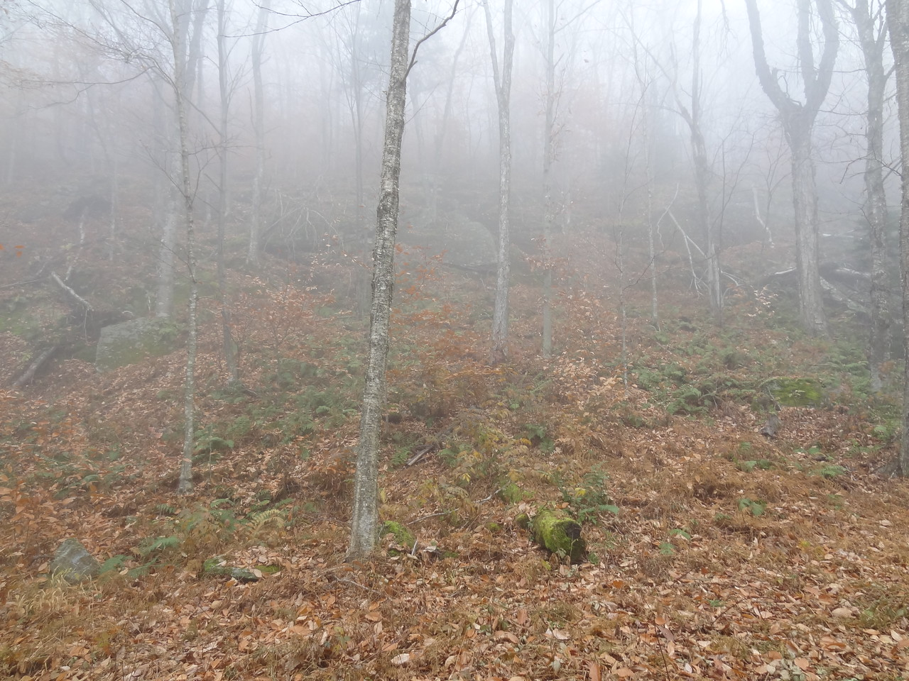 As we got steeper, the fog started getting thicker. We actually met a solo hiker here who turned back because of the spookiness so close to Halloween. He said it was too foggy to see but come on...
