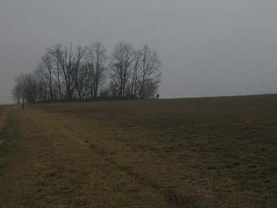 The copse of trees just south of Boiling Springs