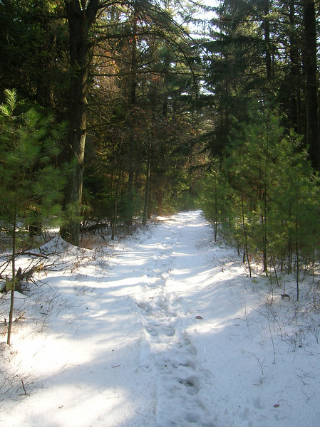 Trudging through the snow in an evergreen corridor