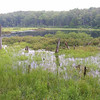 Gore Pond