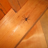 The dreaded Kirkridge spider.  Feasts on sleeping AT hikers...
