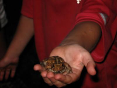 The Kirkridge frog.  Eats spiders.