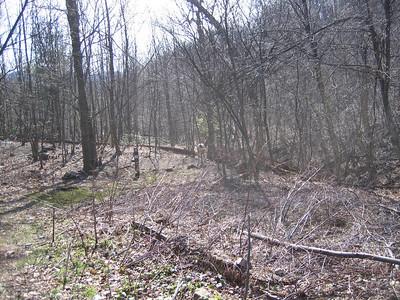 Deer at Blackrock Hut