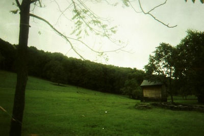 The fields surrounding the Secret Shelter contain deer and turkey aplenty!