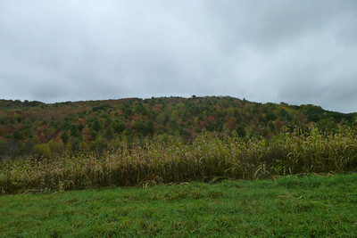 VT Cornfield with fall colors in the background