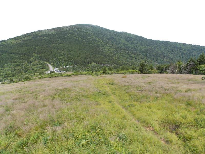 Roan Mountain in her summer attire