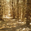 Pine forest near the end of Thursday's slack-pack hike.